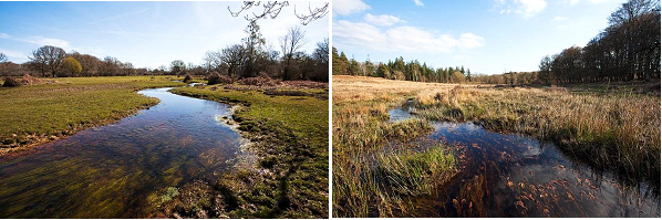 Fletchers Thorns (left) and Soldiers Bog (right) restoration sites.